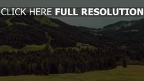 bäume hügel berge