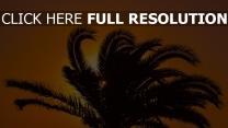 palme sonnenuntergang äste blätter