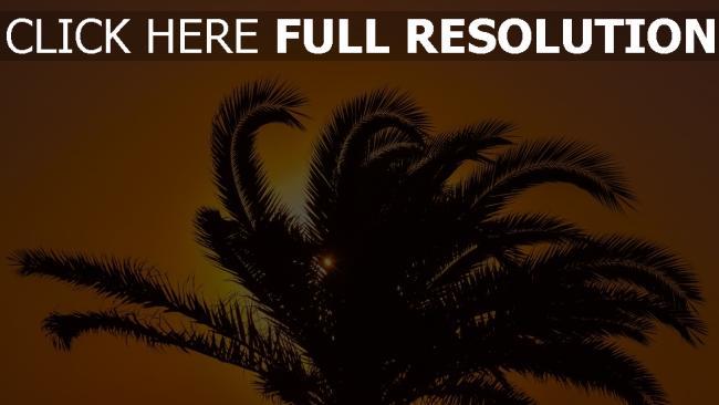 hd hintergrundbilder palme sonnenuntergang äste blätter