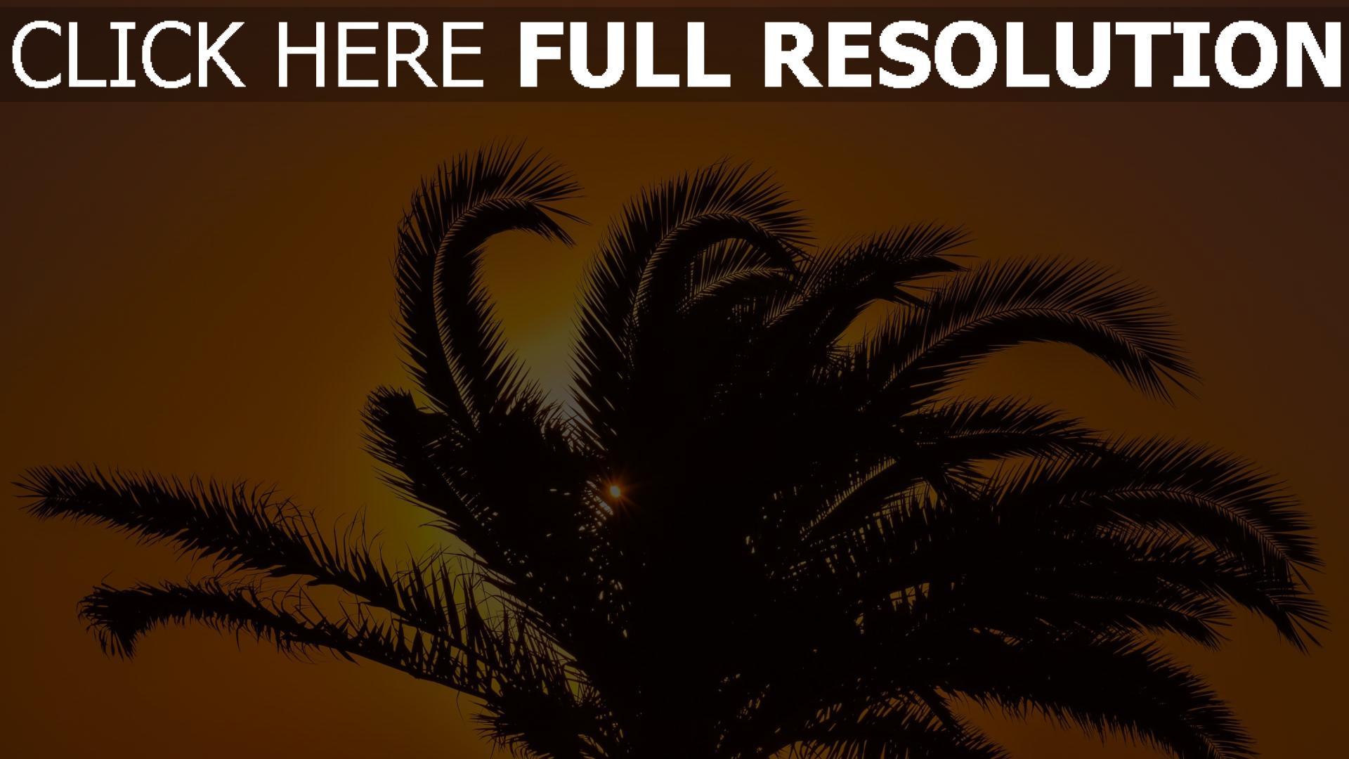 hd hintergrundbilder palme sonnenuntergang äste blätter 1920x1080