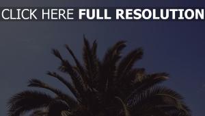 blätter palme baum