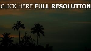 sonnenuntergang himmel palmen
