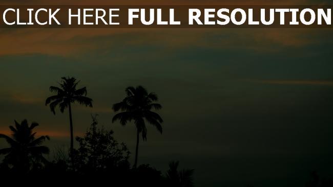 hd hintergrundbilder sonnenuntergang himmel palmen