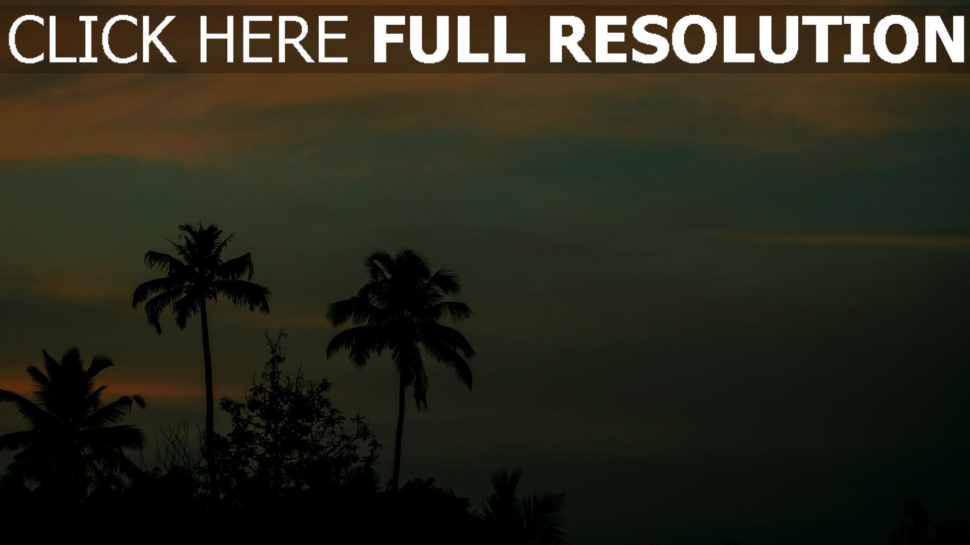 hd hintergrundbilder sonnenuntergang himmel palmen 1920x1080