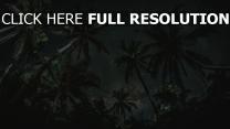 palmen sternenhimmel bäume