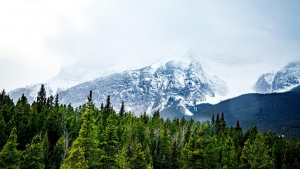 gipfel bäume berge schnee