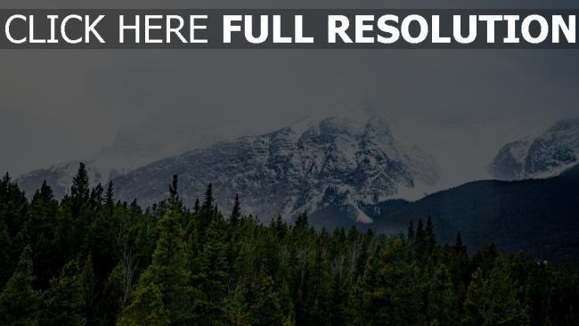 hd hintergrundbilder gipfel bäume berge schnee