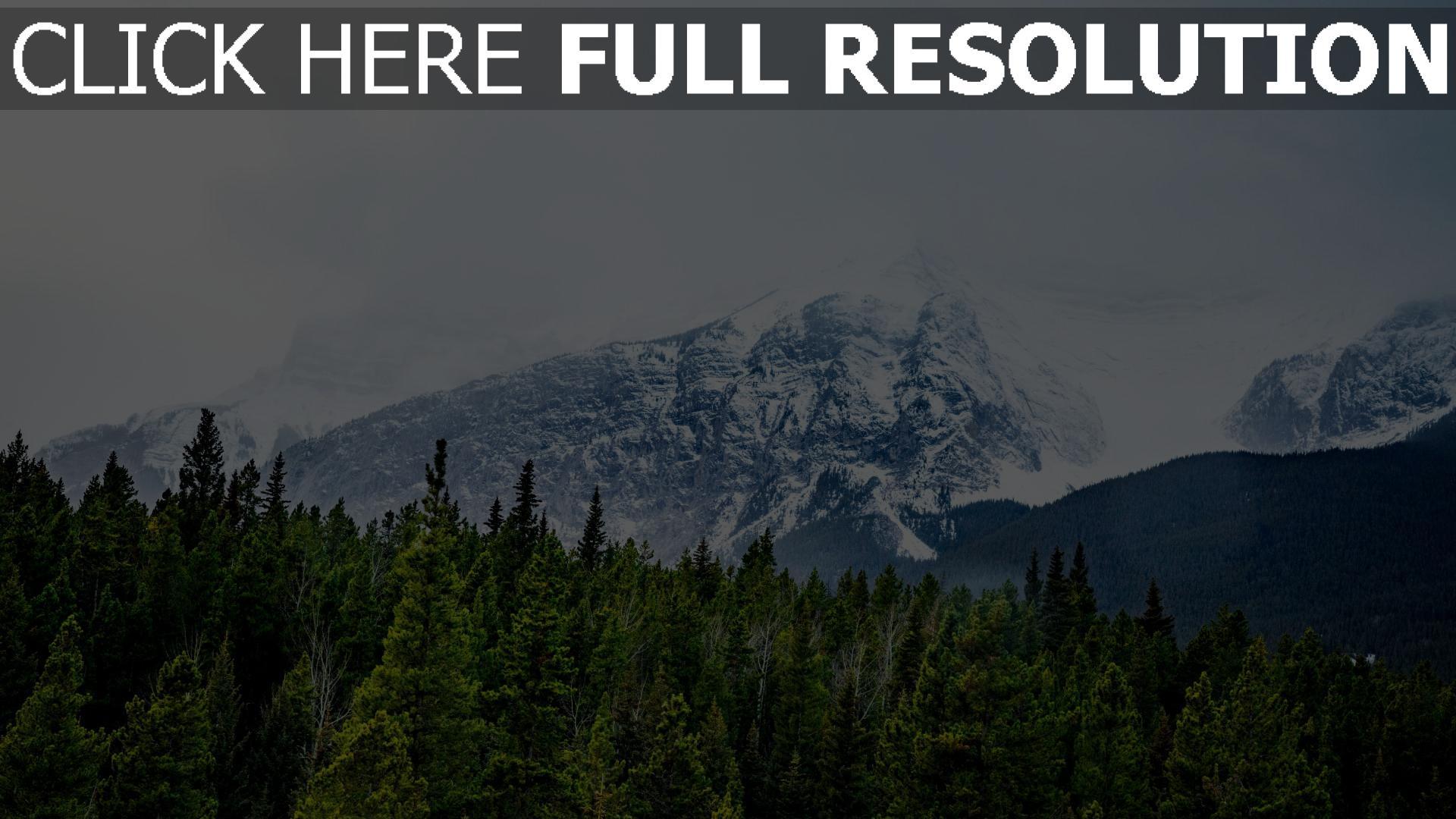 hd hintergrundbilder gipfel bäume berge schnee 1920x1080