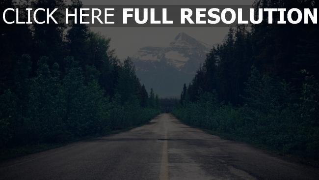 hd hintergrundbilder bäume markierung wald straße