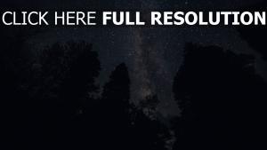 sterne nacht sternenhimmel bäume