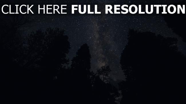 hd hintergrundbilder sterne nacht sternenhimmel bäume