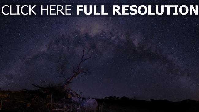 hd hintergrundbilder sterne himmel nacht sternenhimmel baum