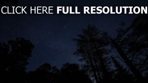 sternenhimmel nacht sterne bäume