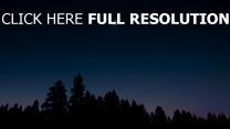 himmel nacht bäume
