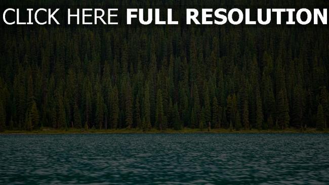 hd hintergrundbilder oberfläche fluss bäume wasser