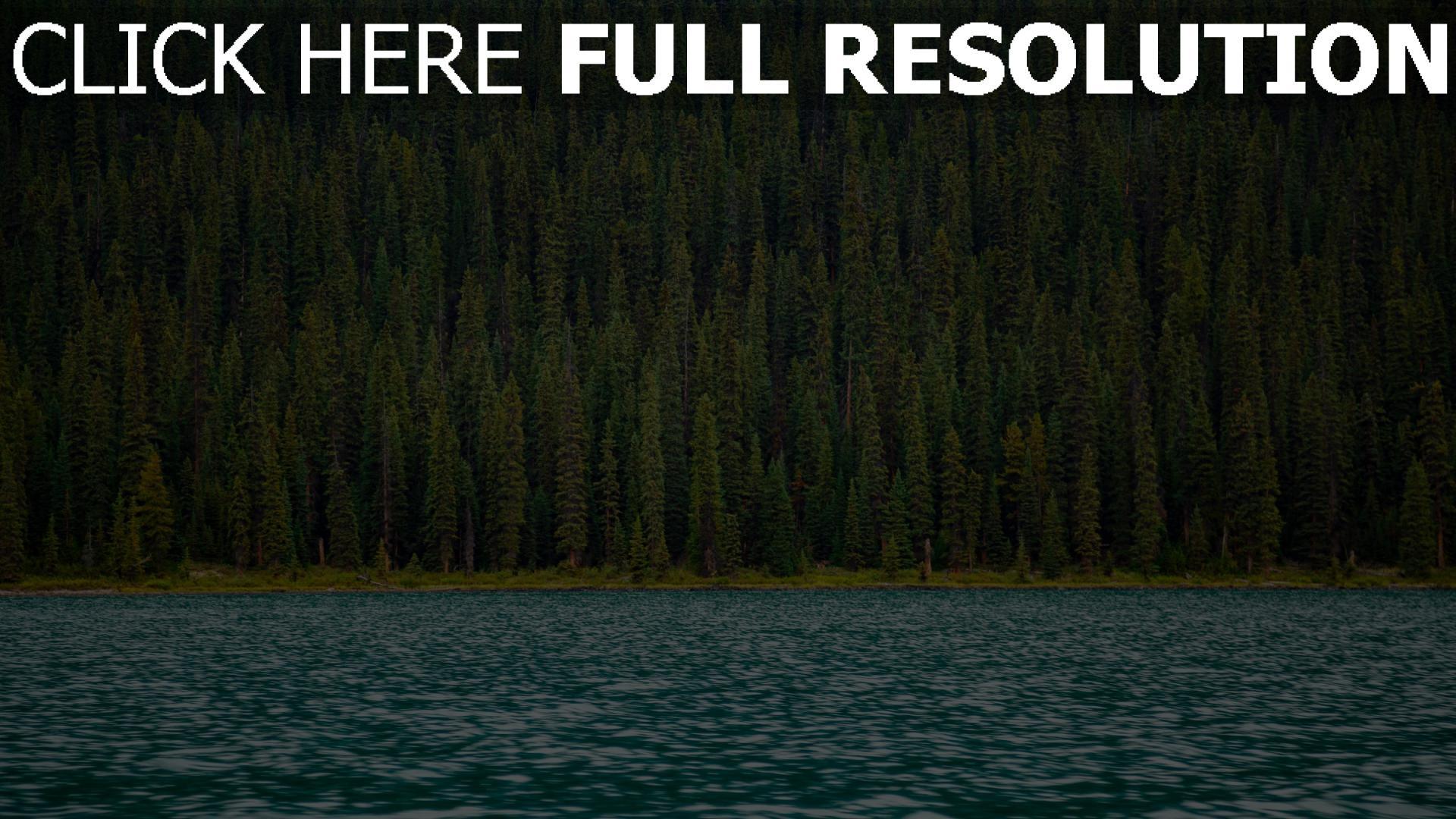 hd hintergrundbilder oberfläche fluss bäume wasser 1920x1080
