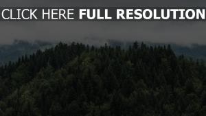 bäume wolken spitzen nebel
