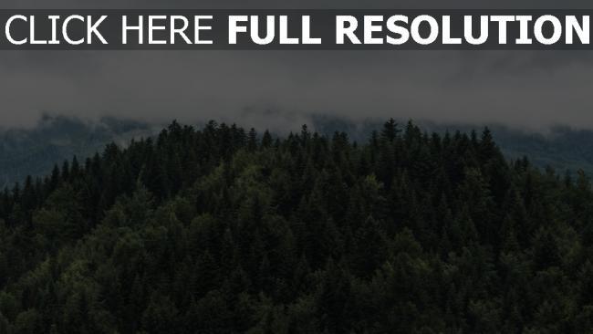 hd hintergrundbilder bäume wolken spitzen nebel