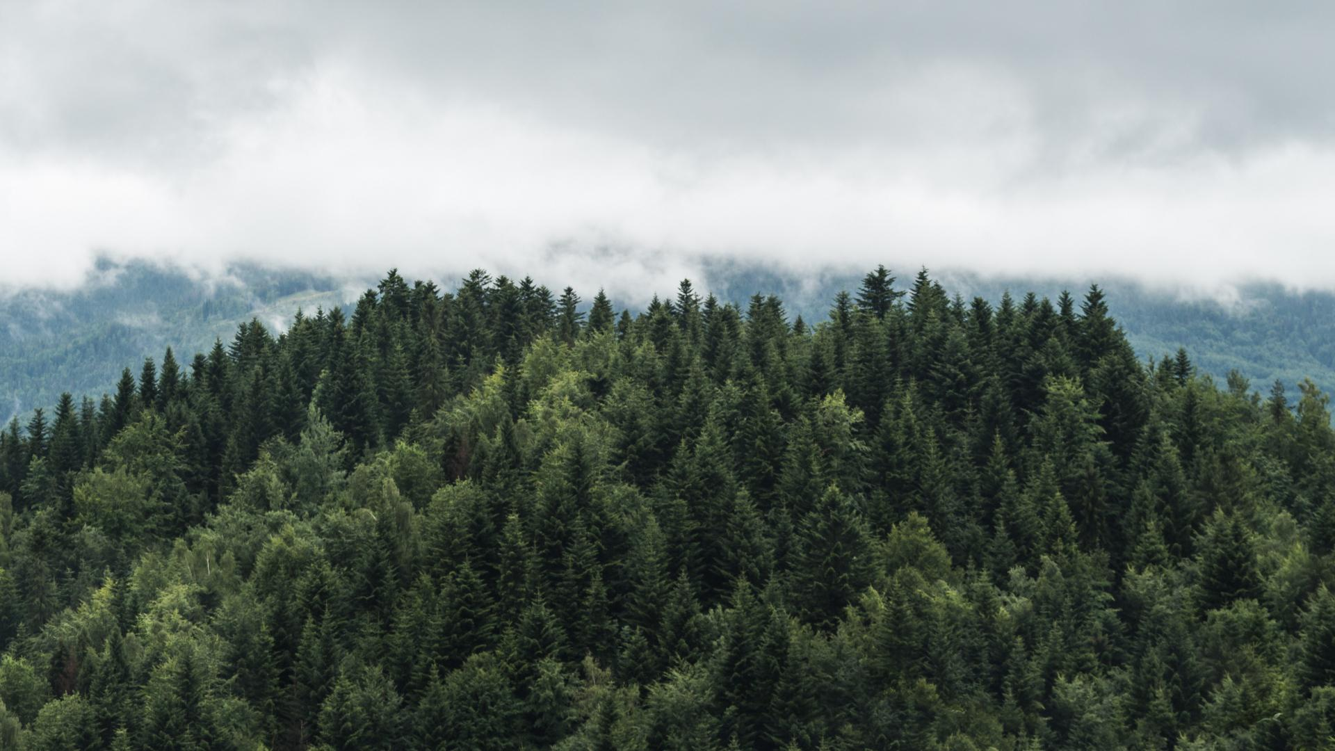 hd hintergrundbilder bäume wolken spitzen nebel 1920x1080