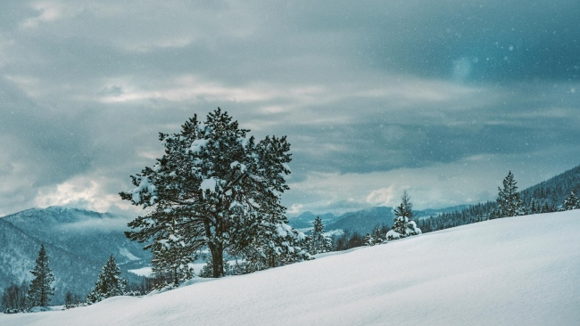 hd hintergrundbilder winter schnee baum