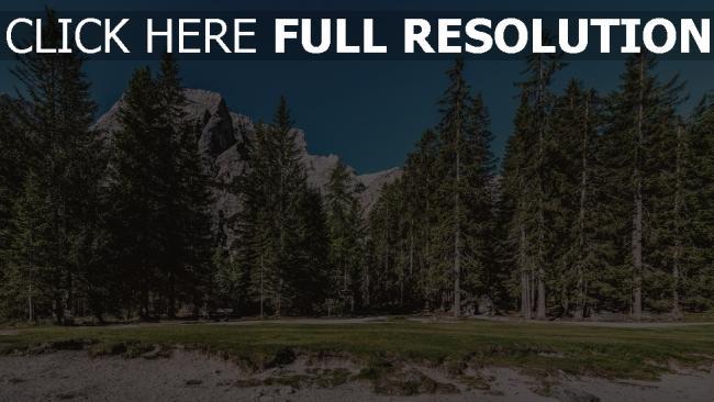 hd hintergrundbilder gras bäume wald