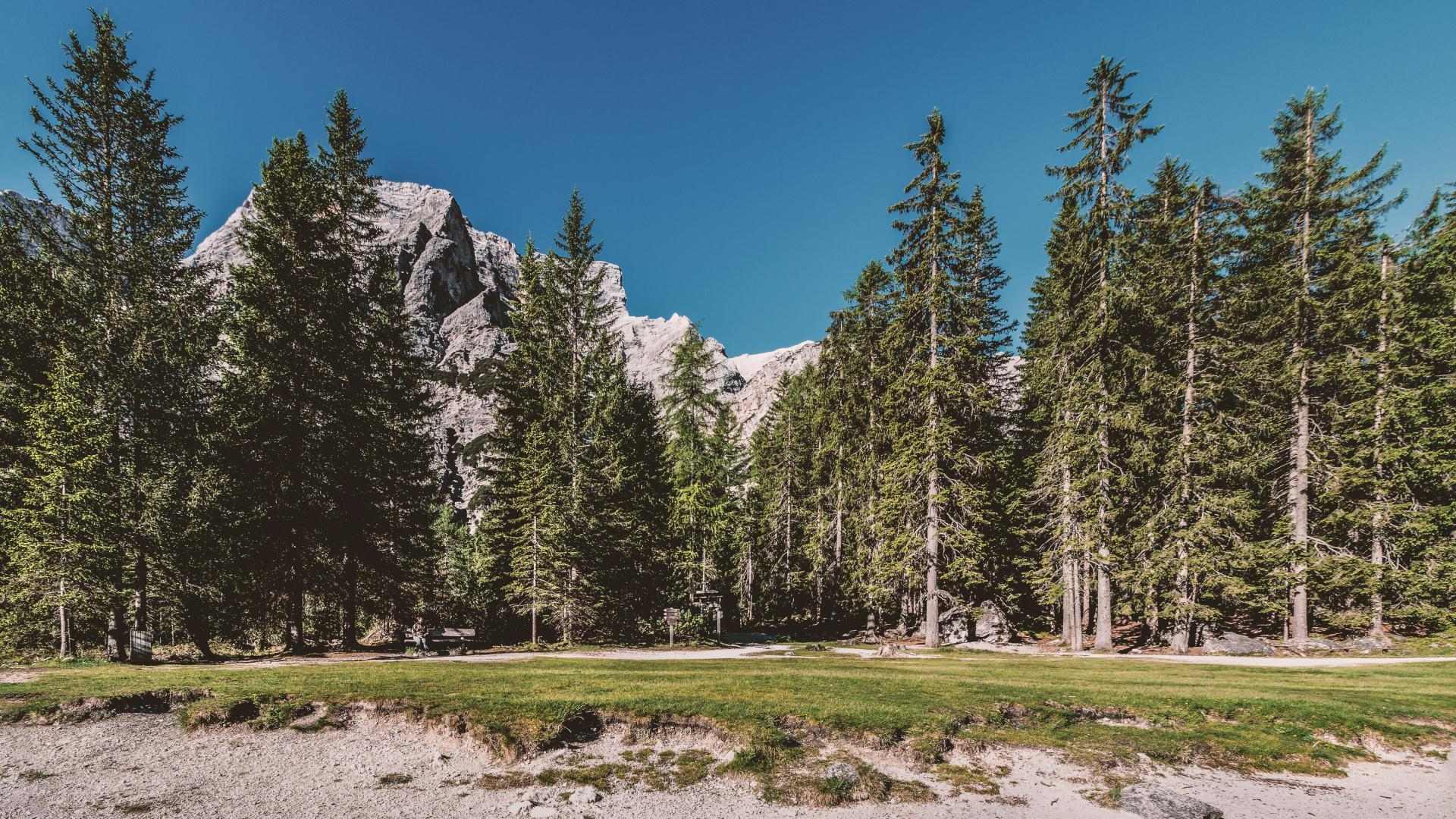 hd hintergrundbilder gras bäume wald 1920x1080