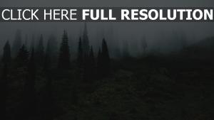 gras bäume nebel