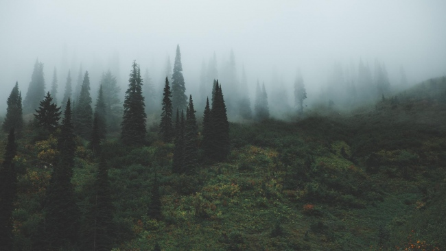hd hintergrundbilder gras bäume nebel