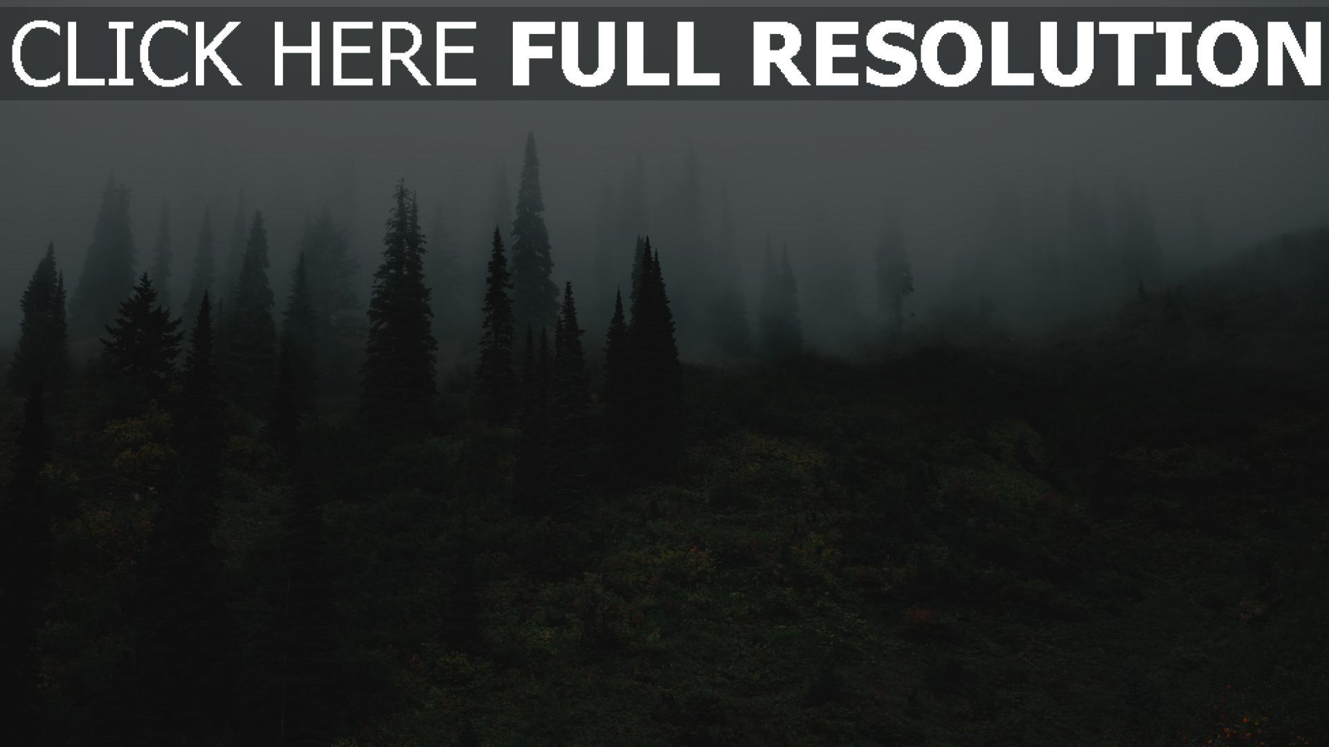 hd hintergrundbilder gras bäume nebel 1920x1080