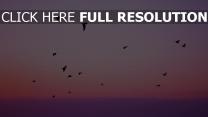 flug silhouetten vögel himmel