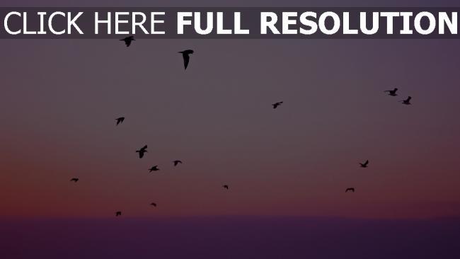 hd hintergrundbilder flug silhouetten vögel himmel