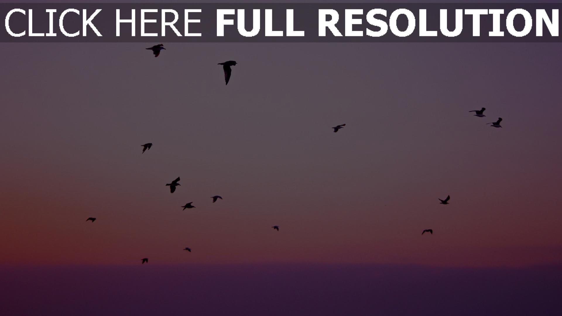 hd hintergrundbilder flug silhouetten vögel himmel 1920x1080