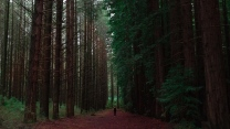 wald bäume menschen einsamkeit