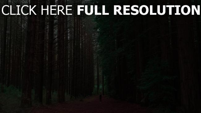 hd hintergrundbilder wald bäume menschen einsamkeit