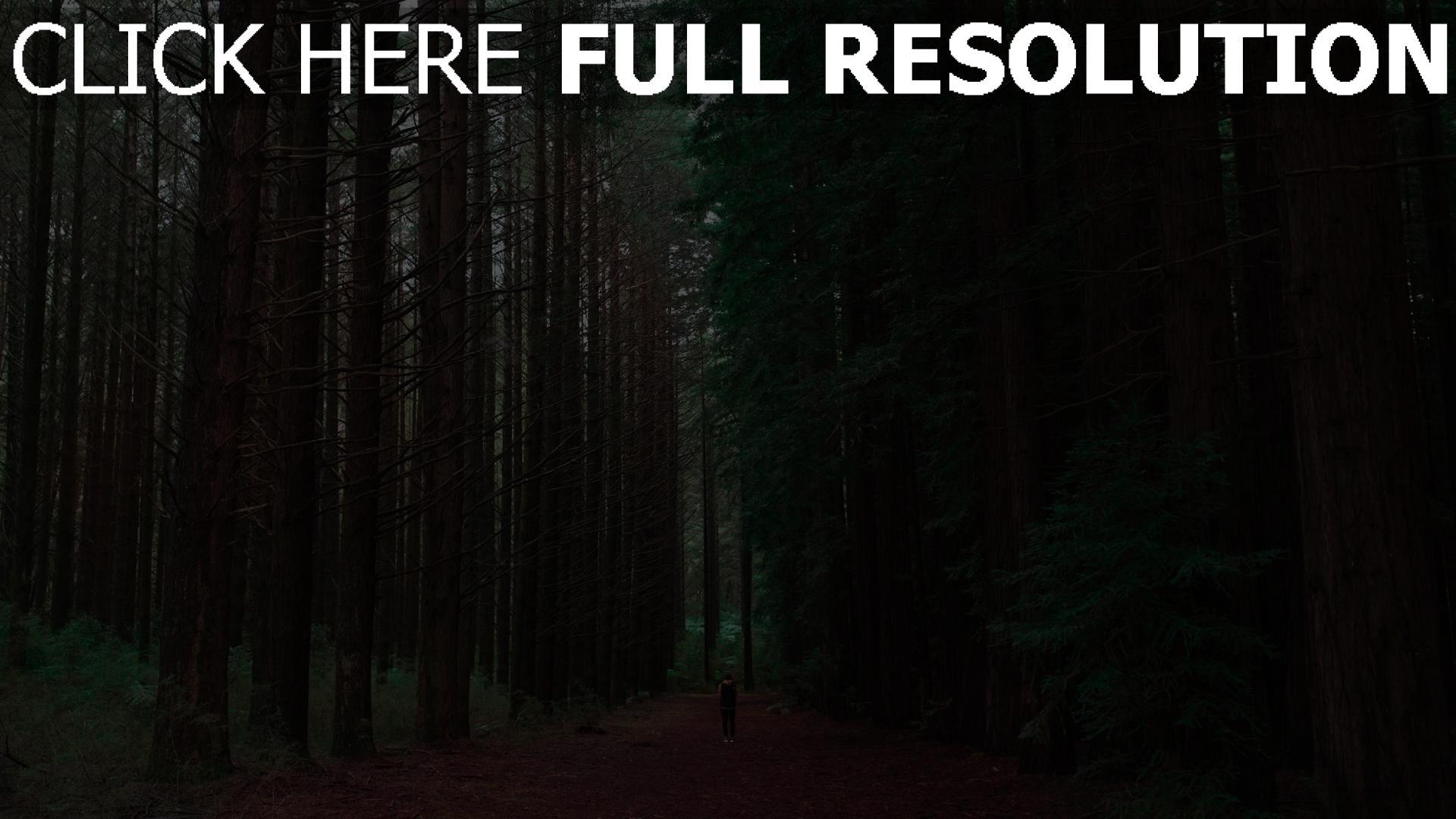 hd hintergrundbilder wald bäume menschen einsamkeit 1920x1080