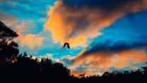 wolken flug himmel vogel