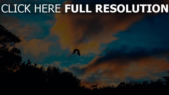 hd hintergrundbilder wolken flug himmel vogel