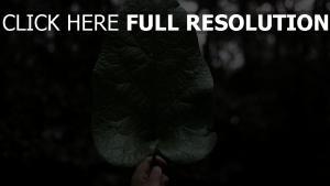 pflanze hand blatt