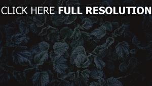frost laub reif