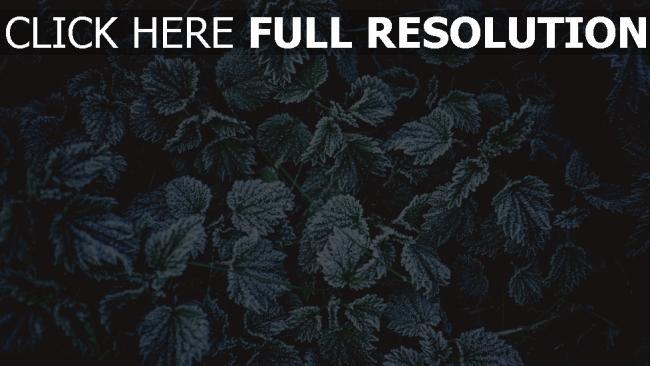 hd hintergrundbilder frost laub reif