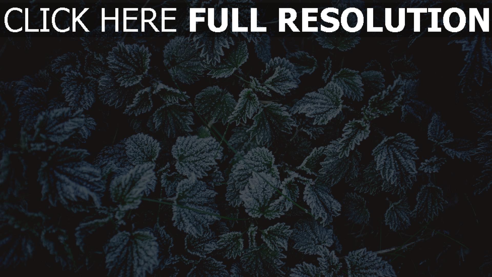 hd hintergrundbilder frost laub reif 1920x1080