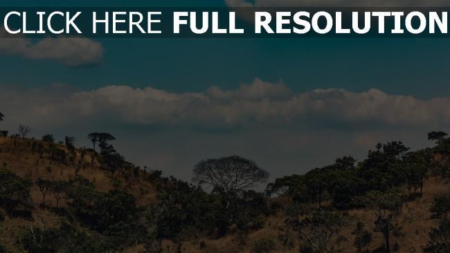 hd hintergrundbilder bäume wolken afrika hügel