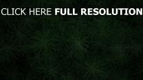 grün gras pflanzen