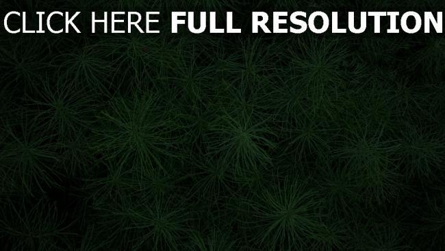 hd hintergrundbilder grün gras pflanzen