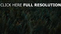 gras grün vegetation