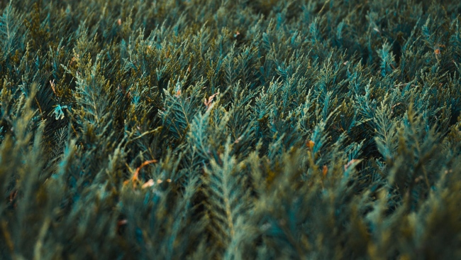 hd hintergrundbilder gras grün vegetation