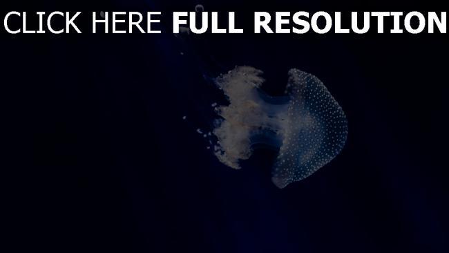 hd hintergrundbilder quallen tentakeln schwimmen unterwasserwelt