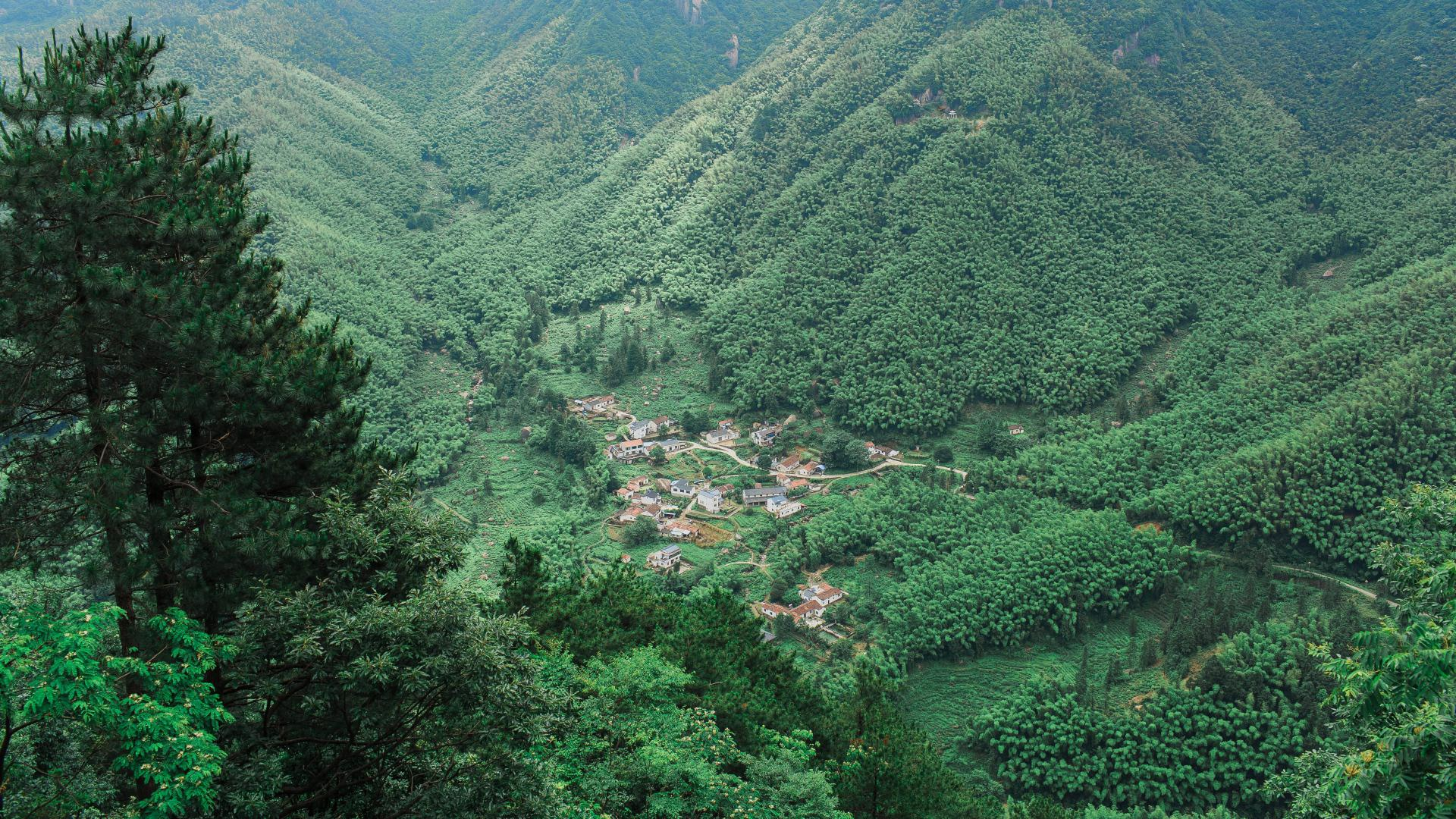 hd hintergrundbilder bäume berge ansicht von oben 1920x1080