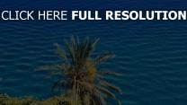sonnig sommer meer palme
