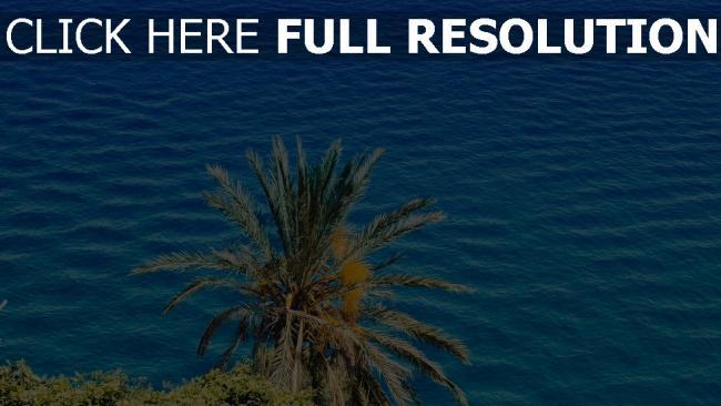 hd hintergrundbilder sonnig sommer meer palme